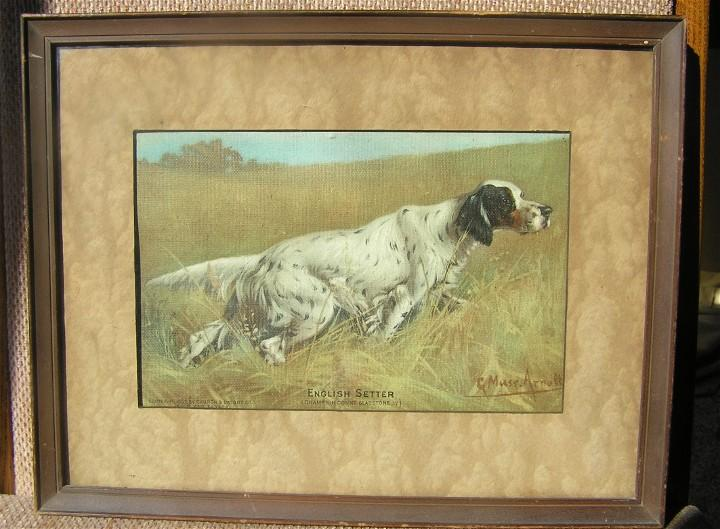 G Muss Arnolt - Dupont Champion - 1903 English Setter Print